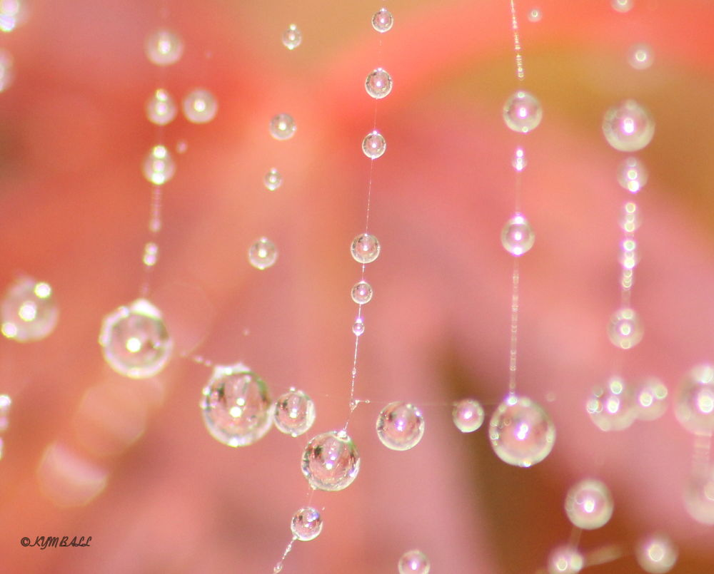 DROPLETS ON A WEB  by kymball58