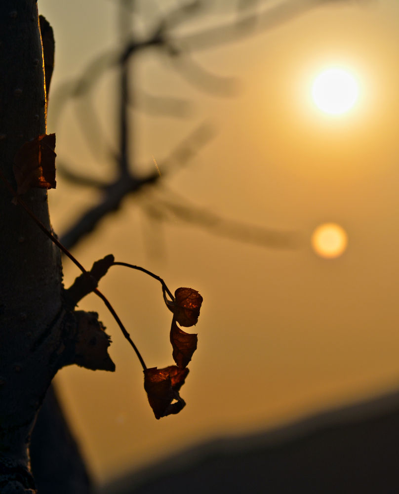 Autumn Sun and the leaf   by Photo Shot