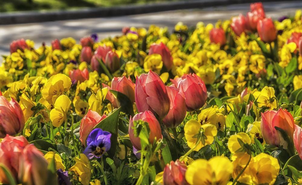 my garden  by Photo Shot