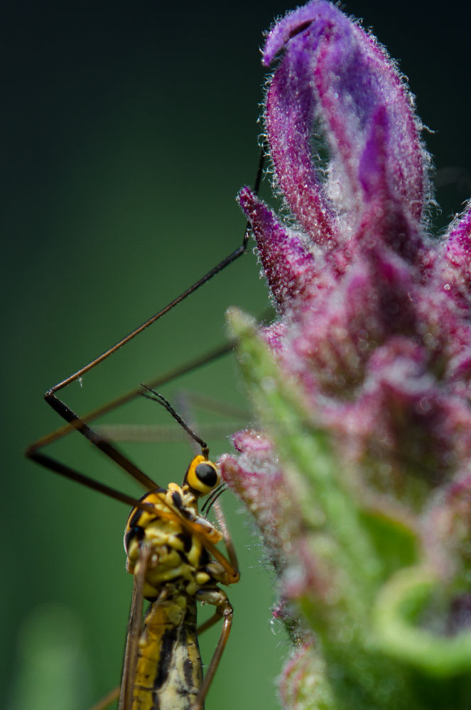Insect 2 by reichelt01