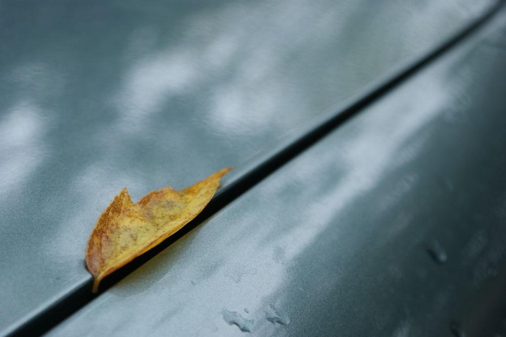 Leaf  by María José Mangini