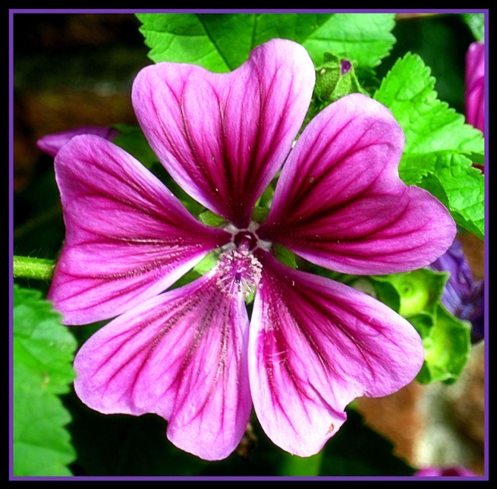 Flower5 by renae