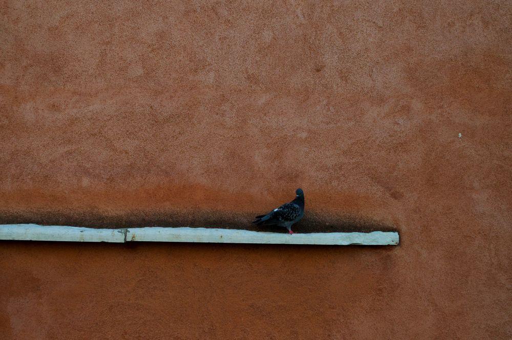 The stalker by Grégory Hallé Petiot