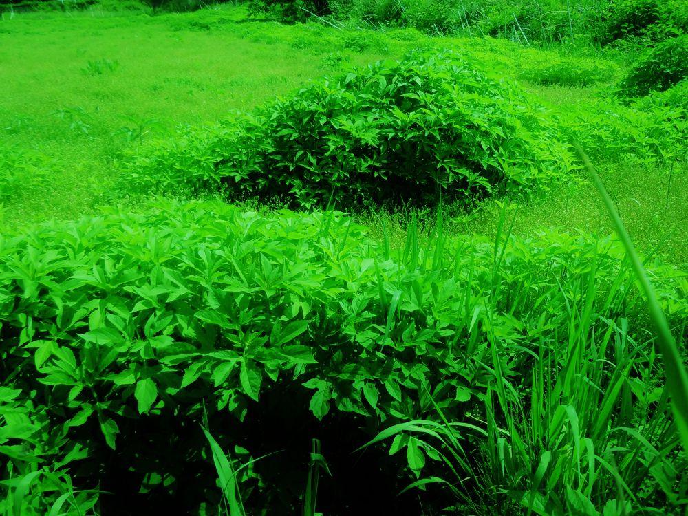 Ever green by masayukishirasawa1