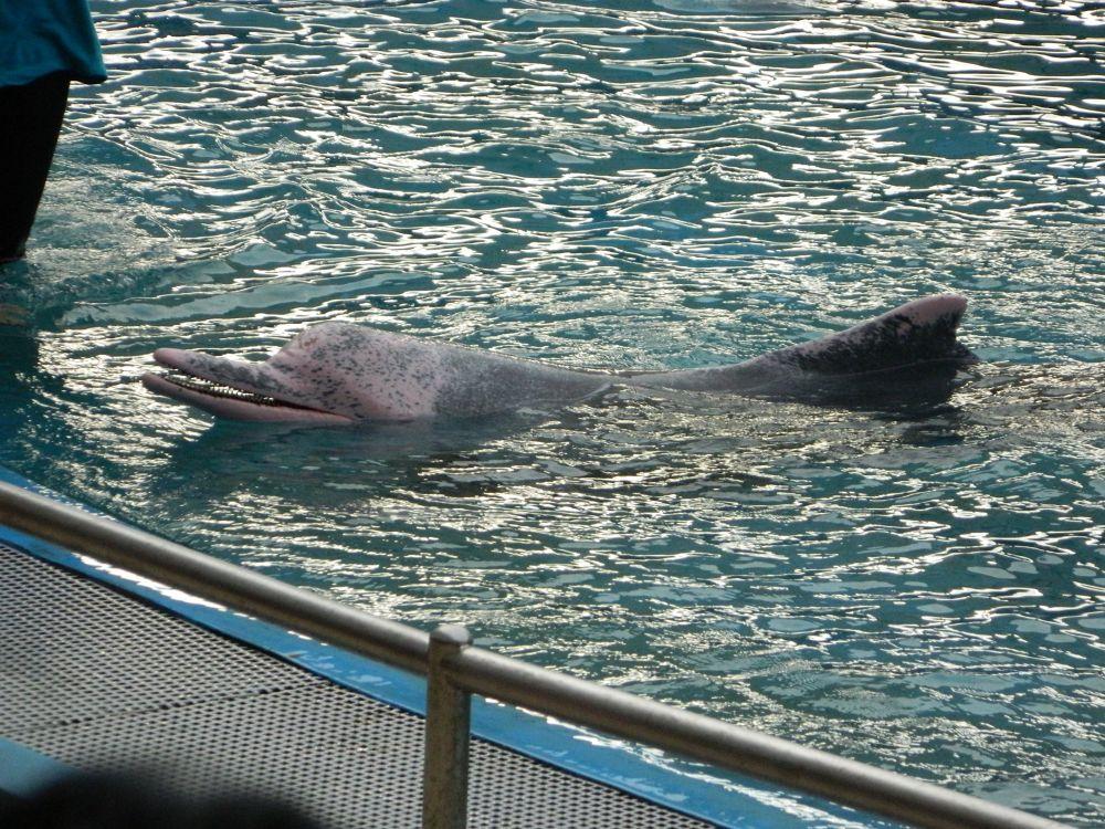 dolphin world by Uday Vanza