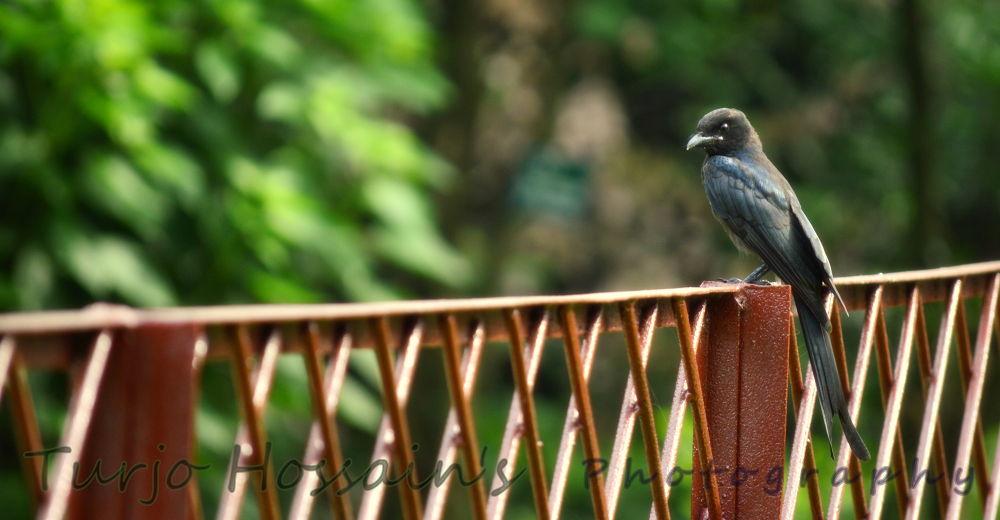 Bird's loneliness by turjohossain
