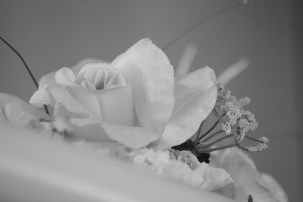 Rosas by ckchamorro
