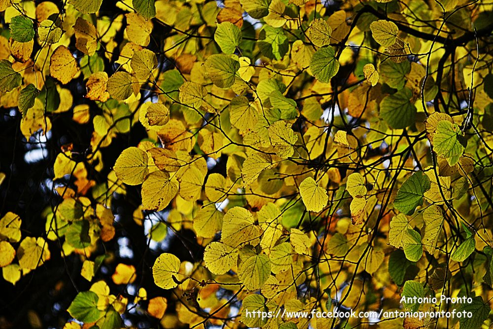 Photo in Nature #natureza #nature #amarelo #autumn #yellow #ypa2013 #outono #wallpaper #papel de parede