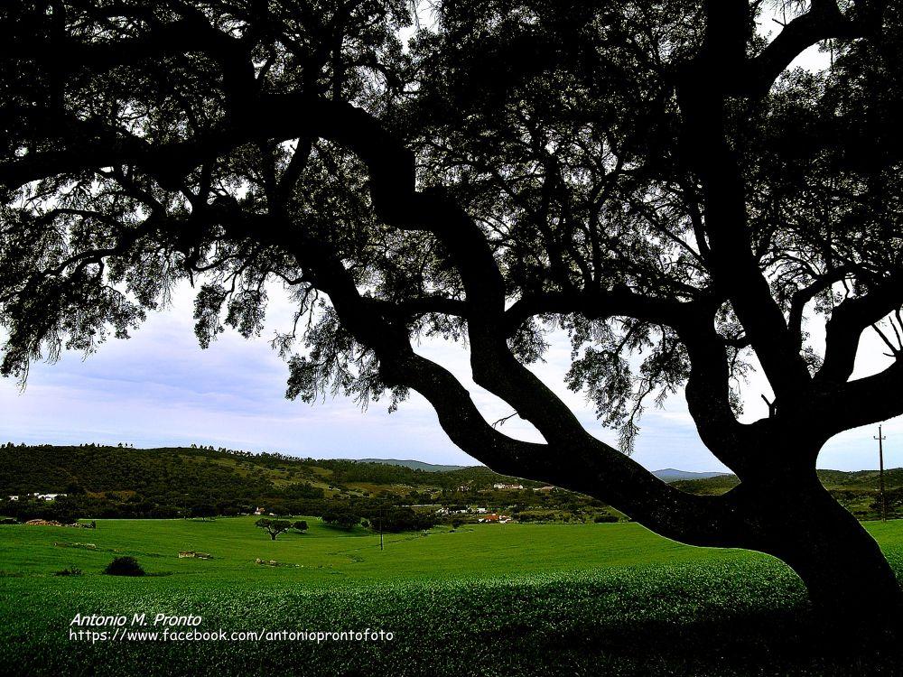 Photo in Landscape #natureza #nature #paisagem #portugal #landscape #ypa2913 #green #verde #arvore #tree #alentejo #wallpaper #papel de papel