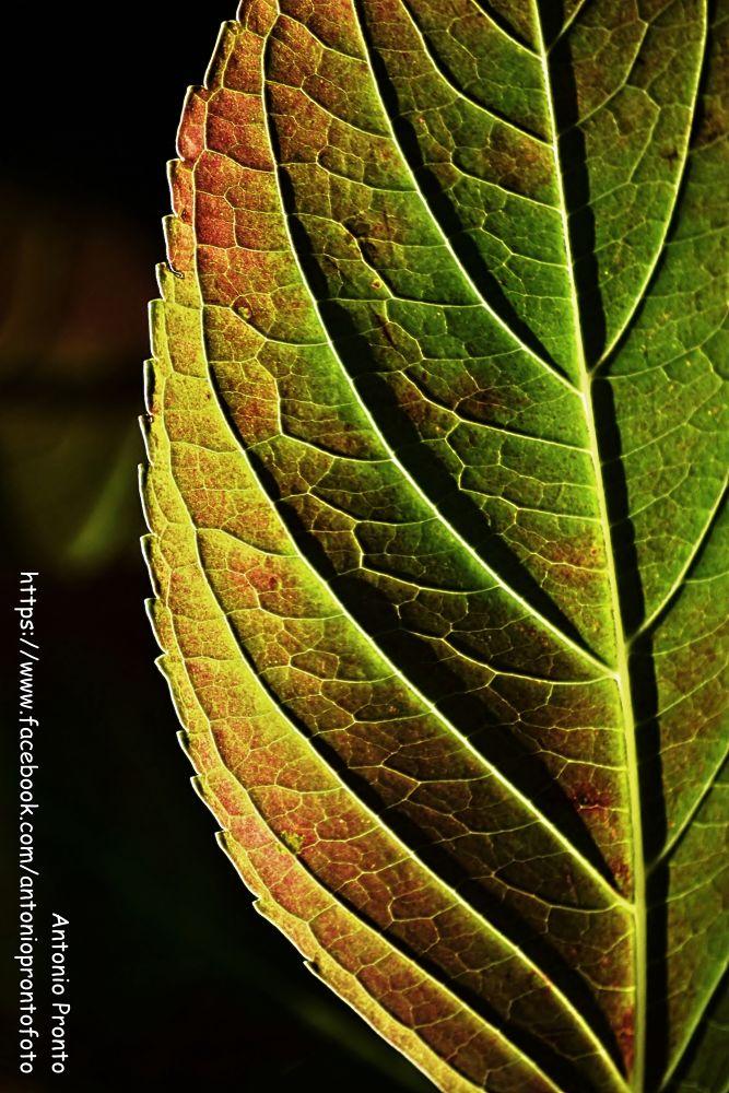 Photo in Nature #cor #color #nature #natureza #folha #leaf #textura #texture #ypa2013 #outono #autumn #antonio pronto #green #verde