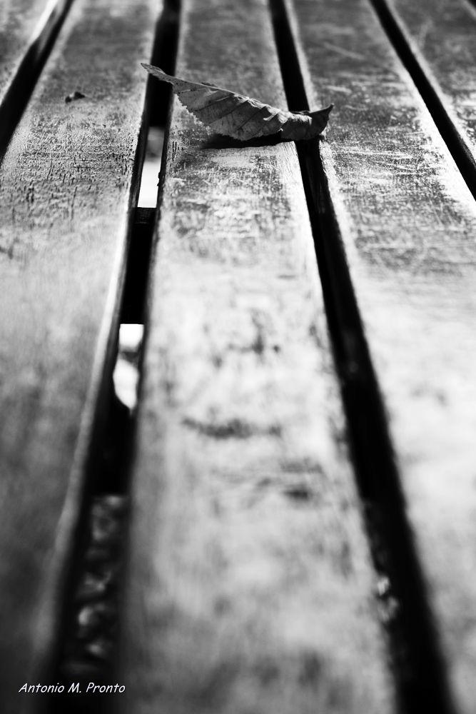 Photo in Black and White #outono #autumn #folha #foliage #banco #seat #black and white #preto e branco #preto #branco #black #wheite