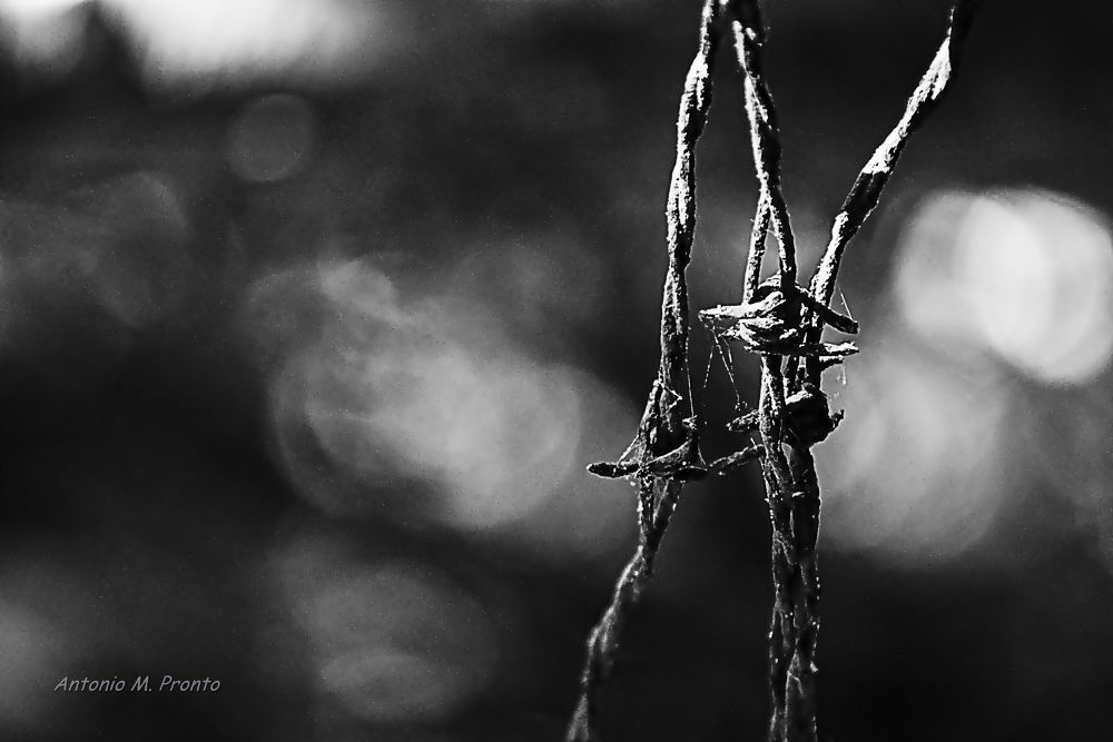 Steel web by AP-B&W