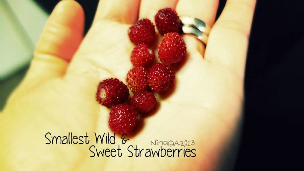 smallest Strawberries in the whole wide world - wild and sweet by NinaOA
