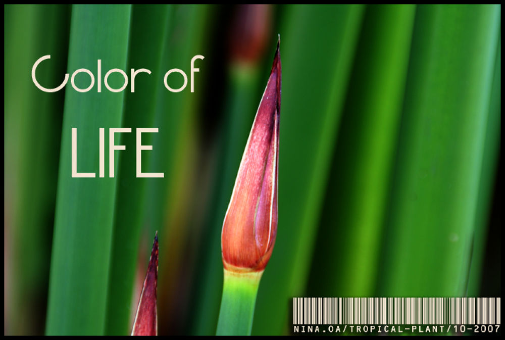 Color of Life by NinaOA