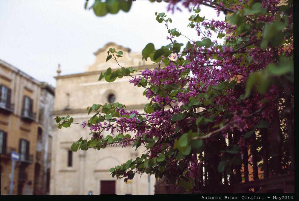 Scorcio di Piazza Marina - Palermo by Antonio Bruce C.