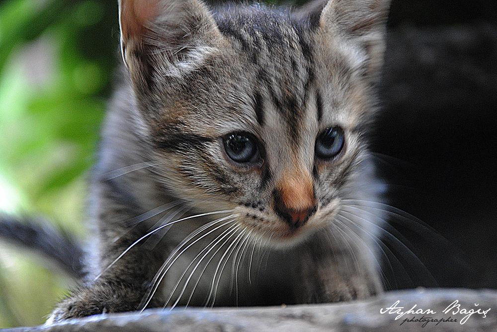 pisicik by Ayhan Bağış