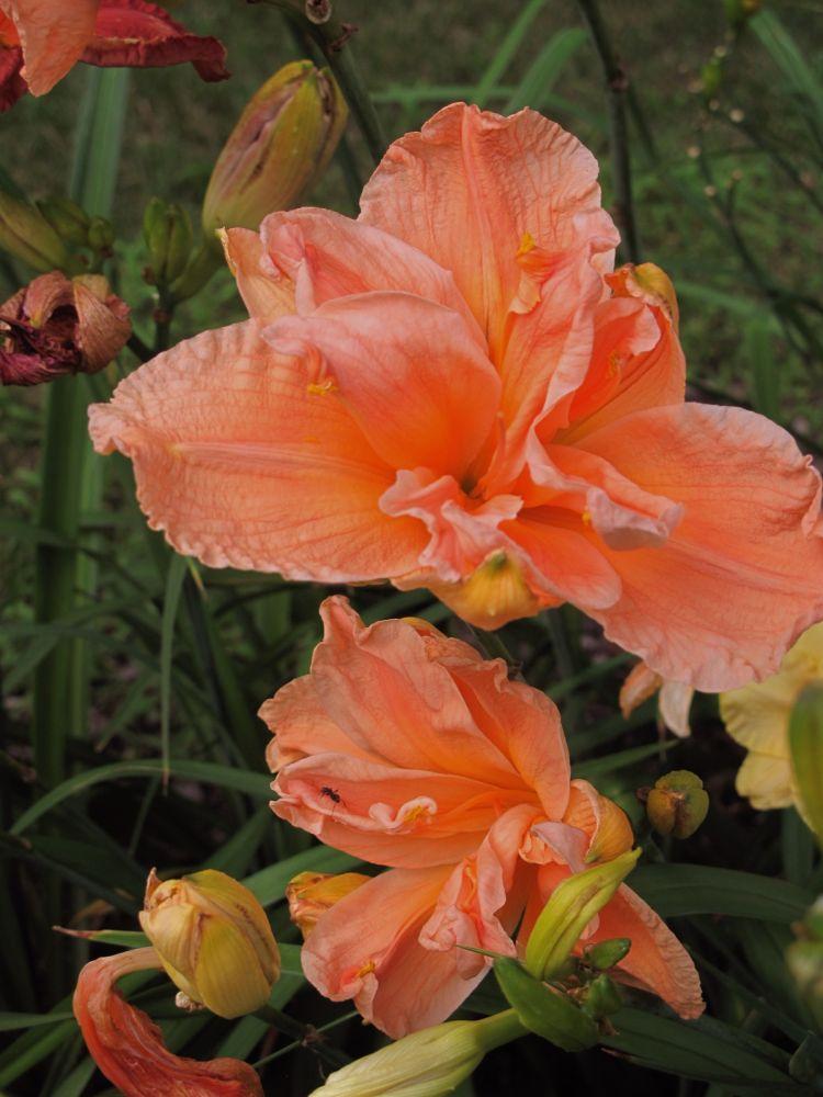 IMG_2405  ORANGE FLOWERS BY PAUL CRIMI. by paulcrimi178