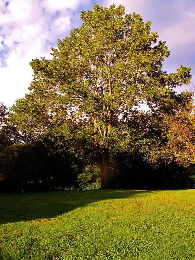 IMG_3438  BEACH TREE by paulcrimi178