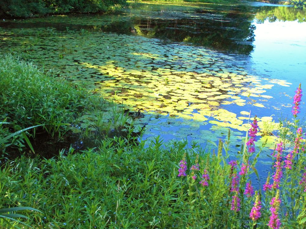 IMG_3547  THE POND by paulcrimi178