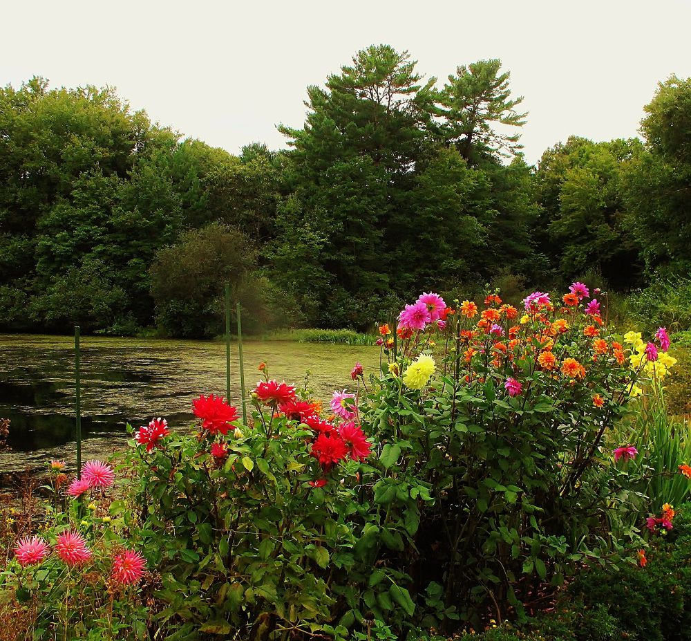 IMG_4329 FLOWERS NEAR THE POND. by paulcrimi178