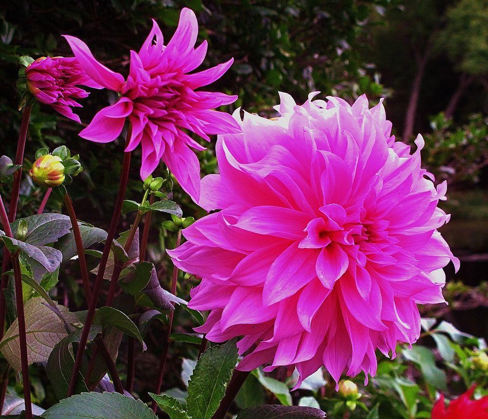 IMG_4363  THREE FLOWERS by paulcrimi178