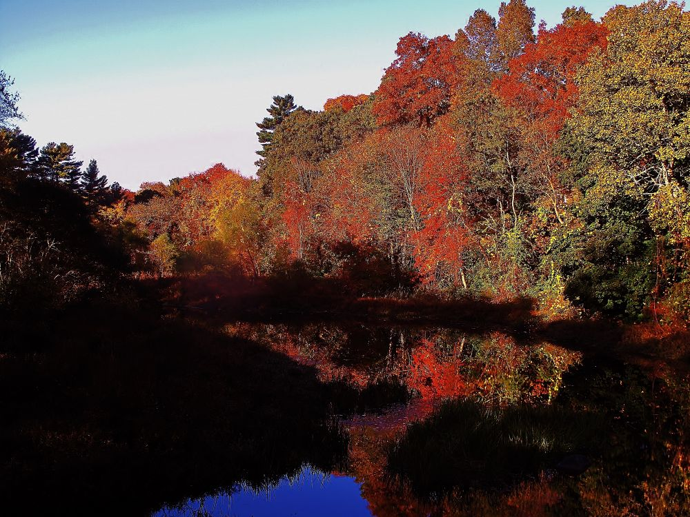 IMG_4641 fall by paulcrimi178