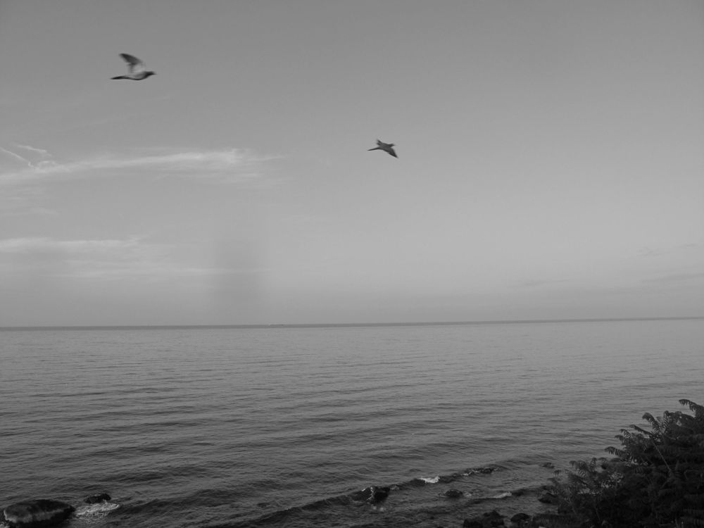 IMG_2755 b&w plymouth ma beach by paulcrimi178