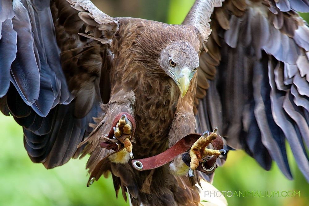 """""""Landing"""" (Dedicated to all the children returning to school after the Xmas break) by photoanimalium.com"""