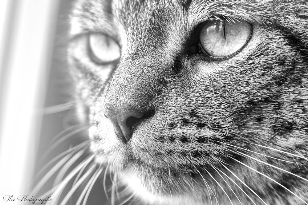 Fat Cat by Tlex