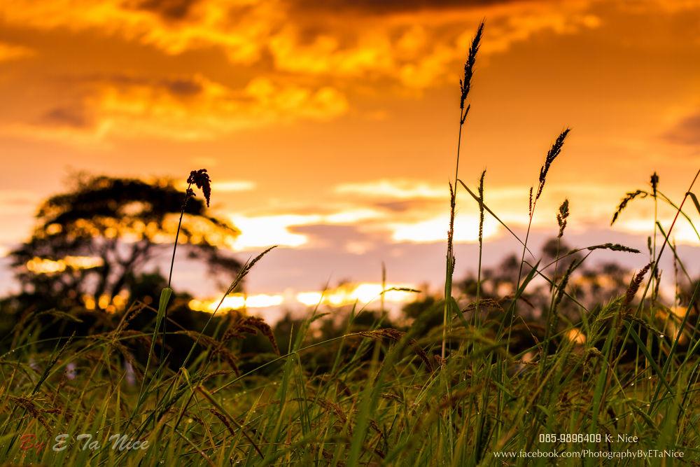 THAI LAND by mayakodak