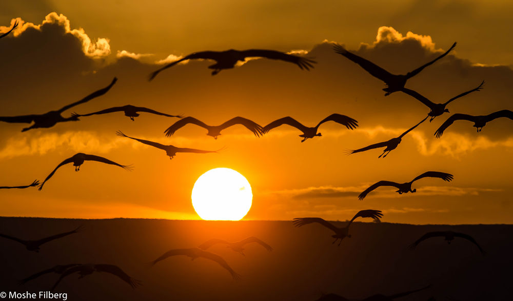 he birds of the morning by Moshe Filberg