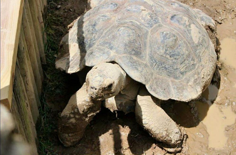 Big Turtle by guitarplayer2571