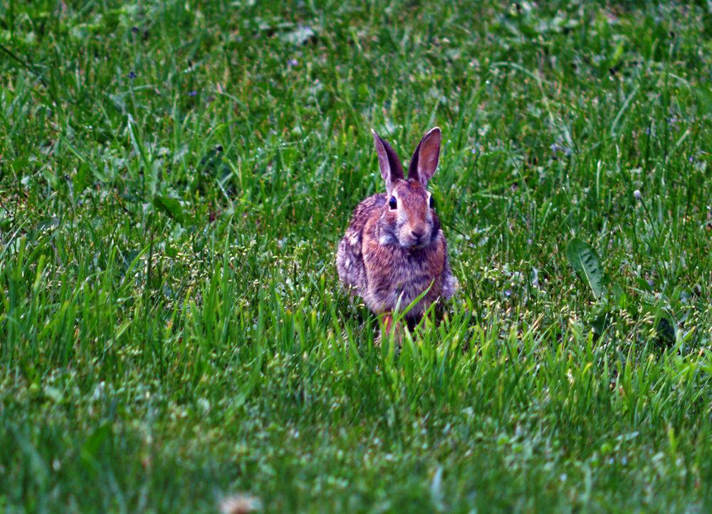 Bunny by guitarplayer2571