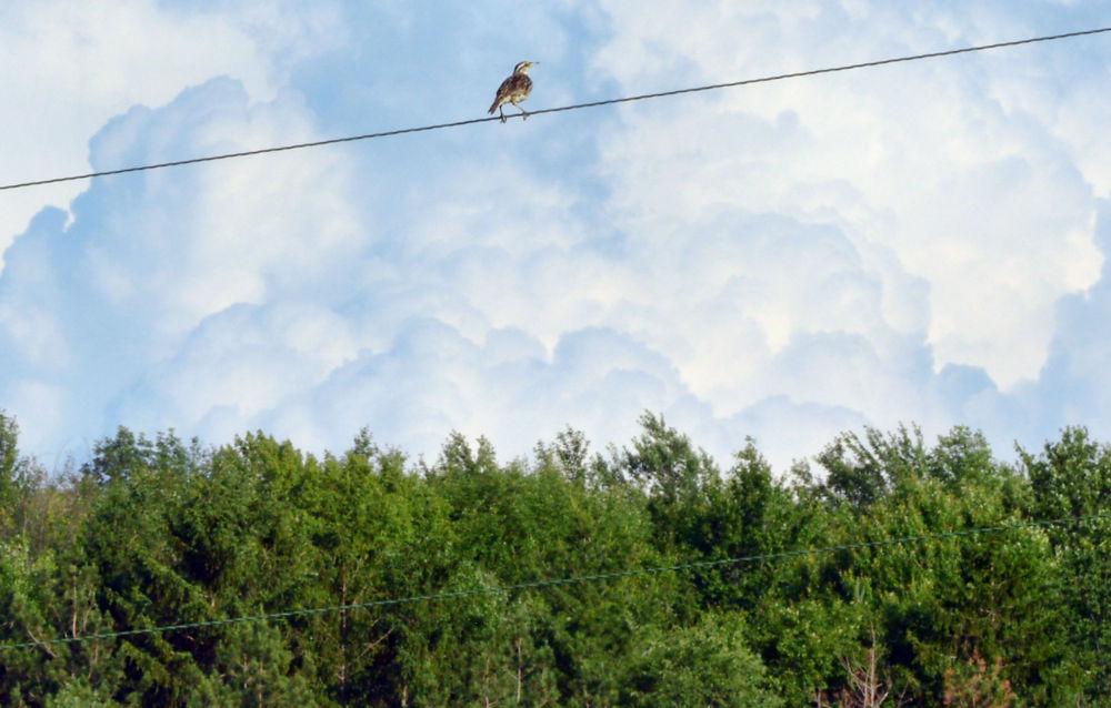 Weird Clouds and a Bird by guitarplayer2571
