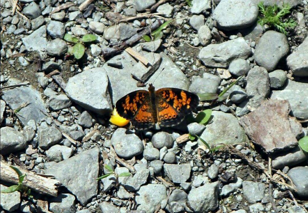 Butterfly.jpg by guitarplayer2571