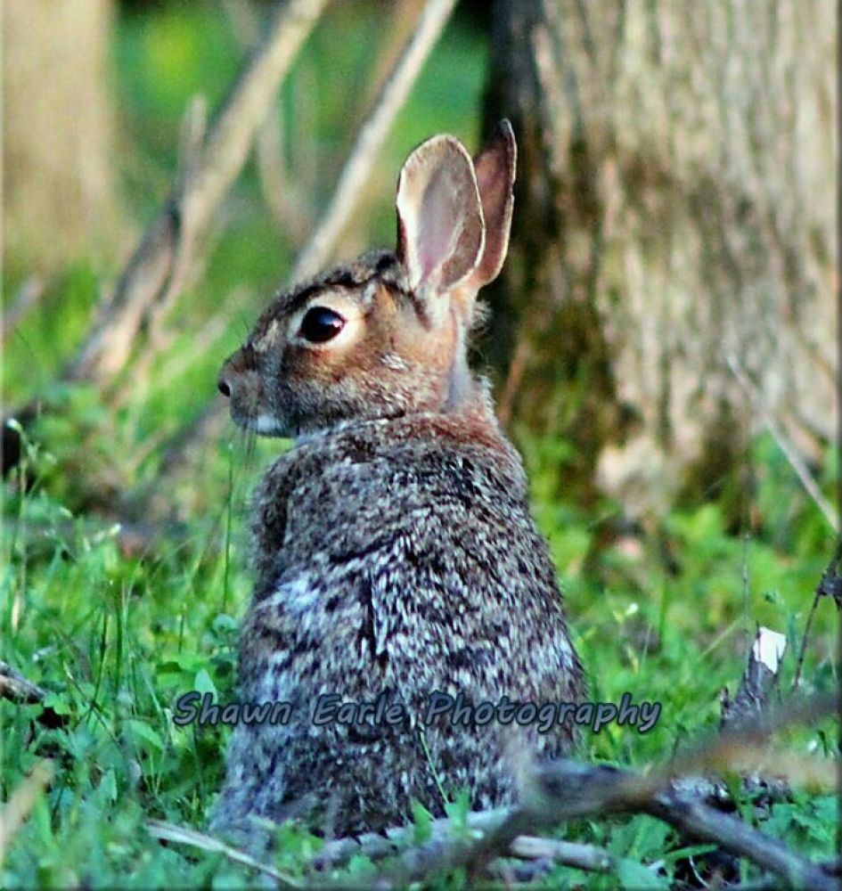 Bunny.jpg by guitarplayer2571