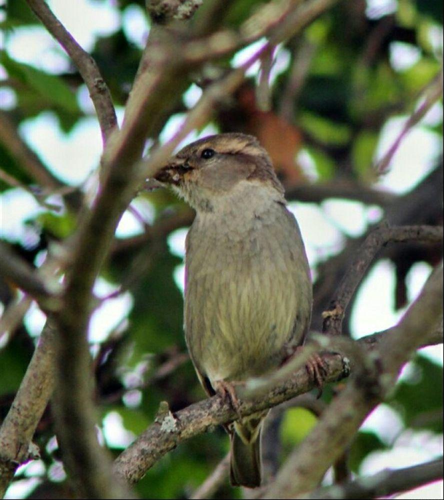 Bird in tree by guitarplayer2571