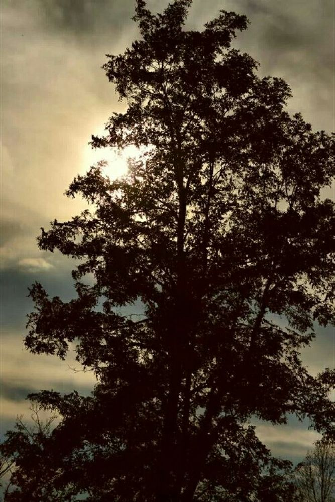 sun through the clouds through a tree in my back yard by guitarplayer2571