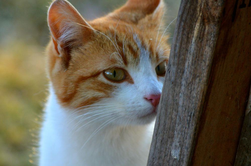 Kitty by guitarplayer2571