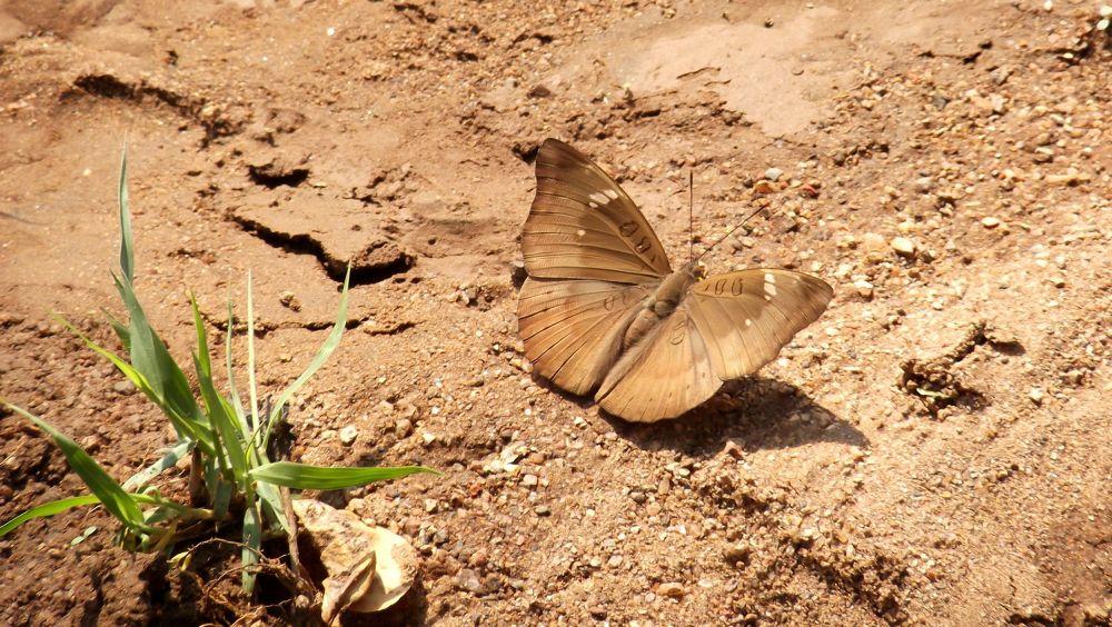 Photo in Nature #delhi #butterfly #india #fuji #2013 #hyderabad #nature #google #warangal