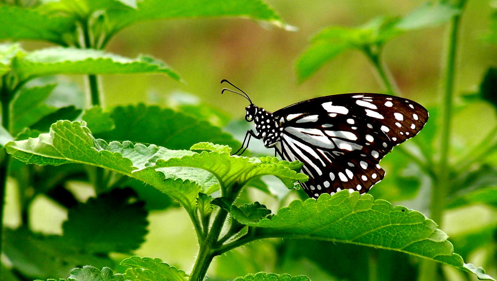 Photo in Nature #butterfly #green #love #nature #2013 #ap #macro