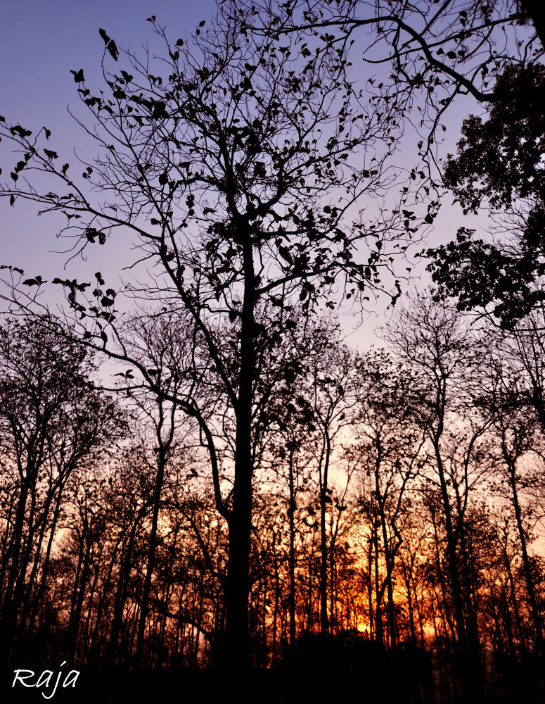 Color of nature  by parthapratimmazumder3