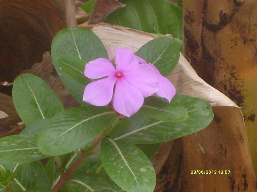 beauty of NATURE by rikkhanigha