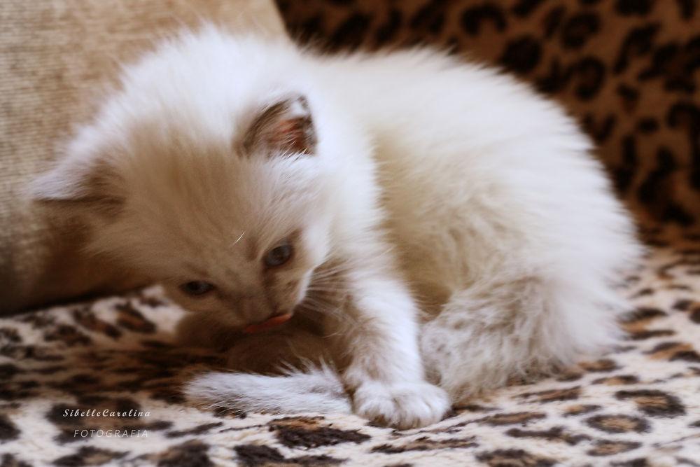 LUNA CAT IMG_6163 by Sibelle carolina Vargas