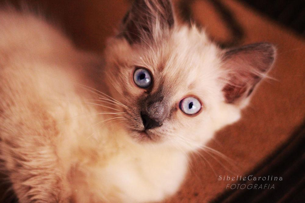 LUNA CAT IMG_9029 by Sibelle carolina Vargas