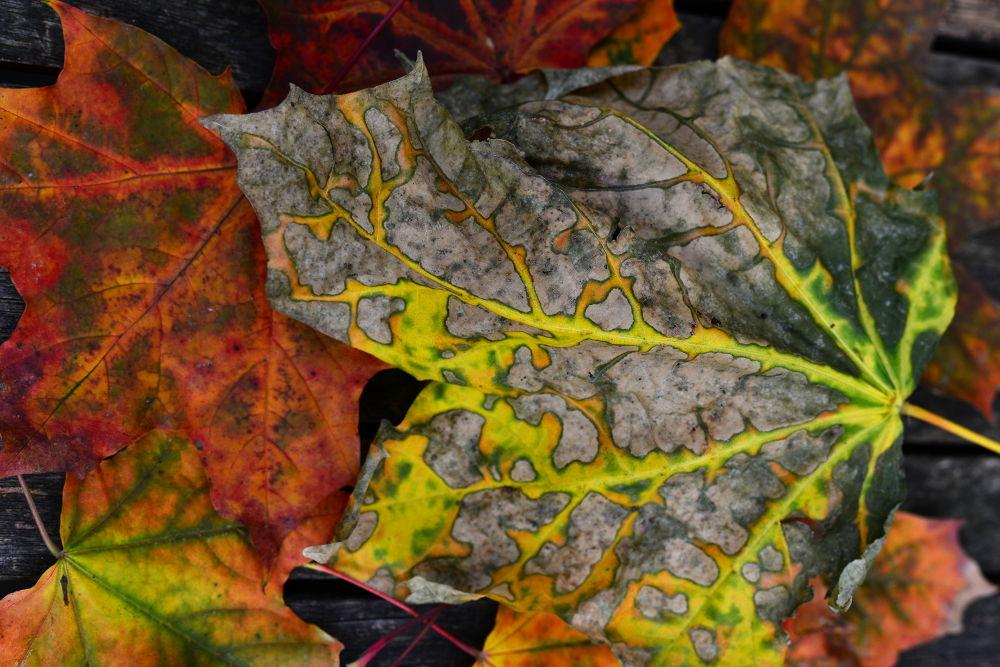 Autumn by Daniel Rauch