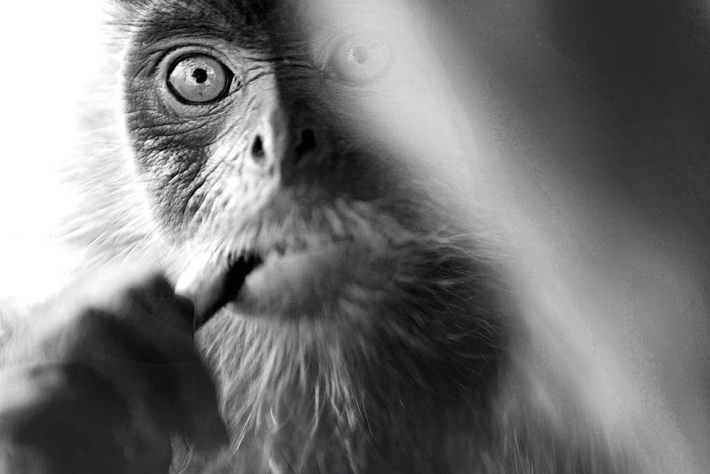 Monkey Magic by powerpuffpunkies