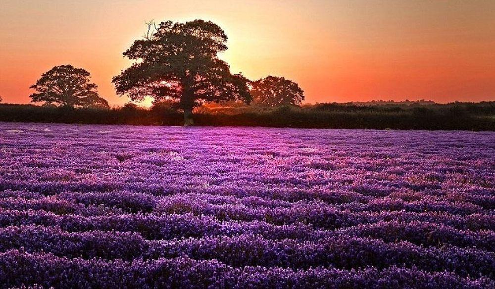 sunset by mmirhosseini