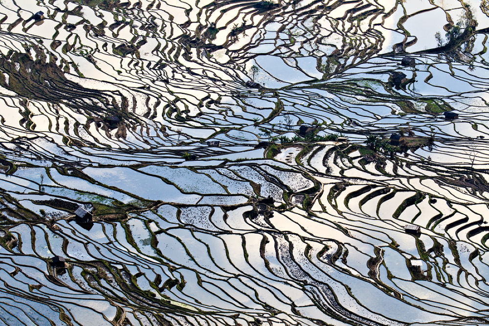 The Matrix of Rice Terraces by William Yu Photography