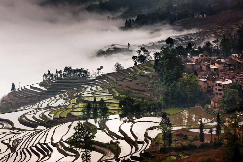 Fogs over the terraces by William Yu Photography